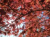 foglie_ninfa
