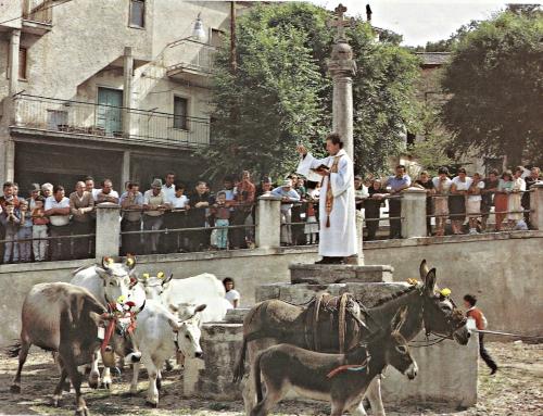 """Tradizioni: la """"turniata"""" di San Vito*"""