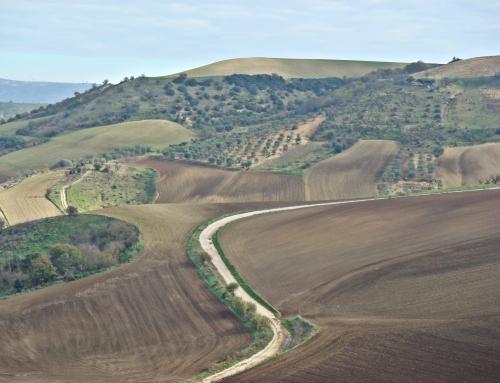 I tratturi della Lucania orientale